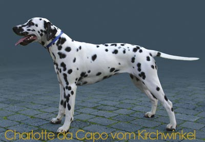 Chalott da Capo vom Kirchwinkel