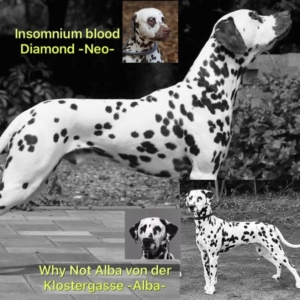 Alba und Neo